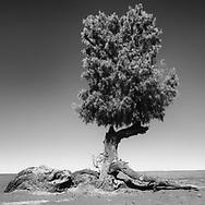 The seasonal desert II
