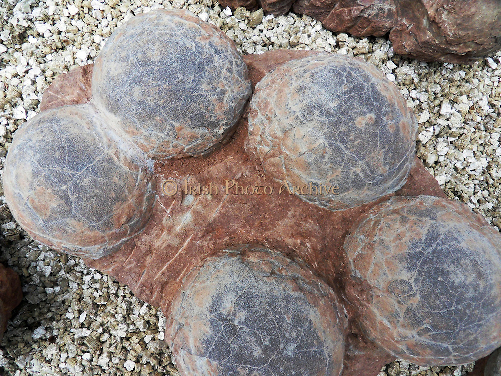 Dinosaur egg from Henau Province, China.