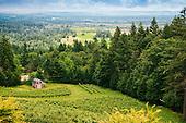 Oregon Wine Press Seven Sails