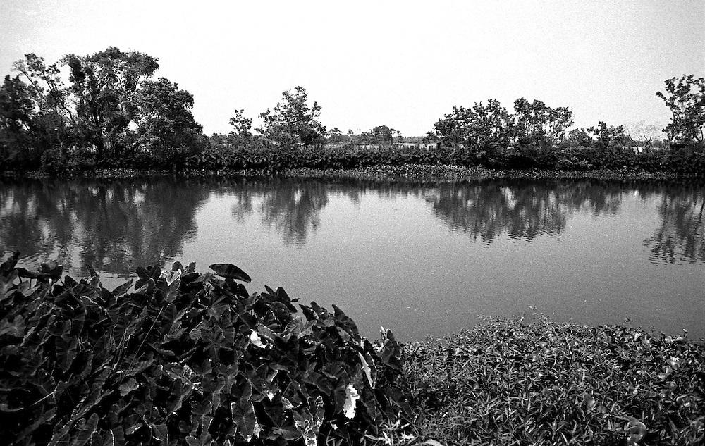 Mississippi River Delta, South of Venice, LA 8/8/05