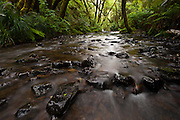 Water makes it way down a creek in a California State Park in Mendocino California.