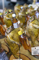 Stuffed cane toads holding bottles of alcohol for sale at the Cotters Markets in Flinders Mall.