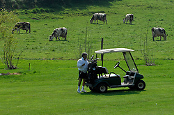 NORMANDY, FRANCE - MAY-01-2007 - David Sabbag of Australia, has some bovine company as he chooses his club on the 4th hole at the Omaha Beach Golf Club - Course: La Mer (The Sea) - Hole 4 - 334 yards - Par 4.(Photo © Jock Fistick)