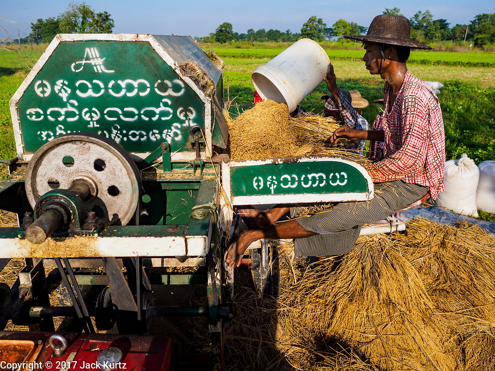 """21 NOVEMBER 2017 - MAUBIN, AYEYARWADY REGION, MYANMAR: A worker operates a threshing machine, separating rice from the chaff, in the Ayeyarwady  Delta. Myanmar is the world's sixth largest rice producer and more than half of Myanmar's arable land is used for rice cultivation. The Ayeyarwady Delta is the most important rice growing region and is sometimes called """"Myanmar's Granary."""" The UN Food and Agriculture Organization (FAO) is predicting that the 2017 harvest will increase over 2016 and that exports will surge to 1.8 million tonnes.   PHOTO BY JACK KURTZ"""