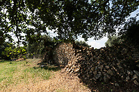 Castellaneta, Taranto.  Vecchia abitazione ristrutturata localizzata in un fatastico uliveto secolare.