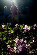 Belo Horizonte_MG, Brasil...Flores da Praca da Liberdade em Belo Horizonte...Flowers in Liberdade square in Belo Horizonte...Foto: BRUNO MAGALHAES / NITRO