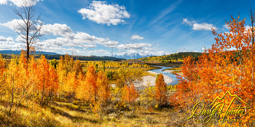 Jackson Hole Panorama.  Here the autumn aspens glowing orange set the stage for the Buffalo Fork of the Snake River to wind though the fall landscape to the Grand Teton Range Beyond.