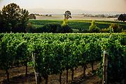 Johan Vineyards in Rickreall, Oregon