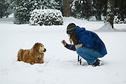 A woman takes a picture of her golden retriever in the snow