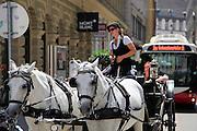 Horse buggys Vienna, Austria