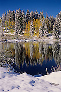 Snow covered spruce and aspen in a wintery reflection.