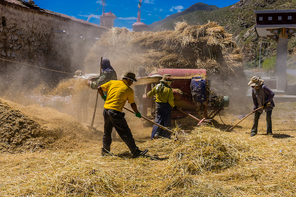 Threshing barley, near Dagze, Tibet (Xizang), China.