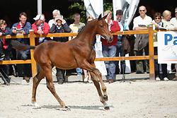 011 - Fimondro<br /> KWPN Paardendagen Ermelo 2010<br /> © Dirk Caremans