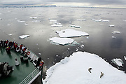 Crystal Sound, Antarctic Peninsula, Antarctica - Tourists stand on deck watching Crabeater seals as the Russian research vessel Akademik Ioffe navigates around ice floes in Crystal Sound. <br />  &copy;Ann Inger Johansson/zReportage/Exclusivexpix media