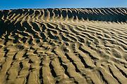 Ripples and sand dunes <br /> Great Sand Hills<br /> Saskatchewan<br /> Canada