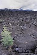Lava Rocks, Highway, Oregon