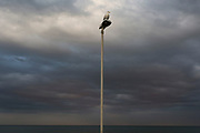 A single seagull perches on top of a lamp post overlooking approaching storm clouds over the North Sea, on 13th July 2017, at Bridlington, East Riding, England.