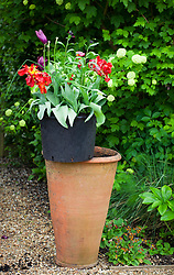 Black plastic pot (for use with long tom pots)