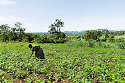 An African farmer walks in her garden in Lwala, a town in the North Kamagambo region of Kenya.