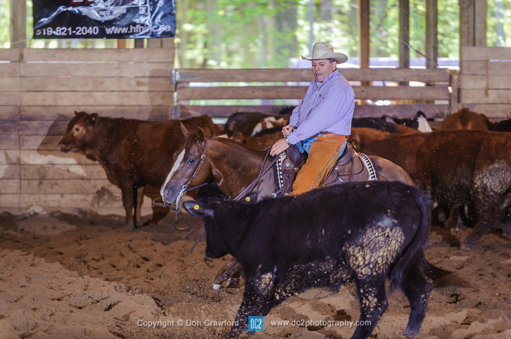 May 20, 2017 - Minshall Farm Cutting 3, held at Minshall Farms, Hillsburgh Ontario. The event was put on by the Ontario Cutting Horse Association. Riding in the Non-Pro Class is J P Gravel on Red Hot Twister owned by the rider.