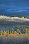 Partial burn forest, Flathead National Forest Montana USA