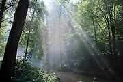 Morgennebel am Fluss, Kirnitzschtal, Bad Schandau, Sächsische Schweiz, Sachsen, Deutschland   mornig fog at river, Kirnitzsch valley,  Bad Schandau, Saxon Switzerland, Saxony, Germany
