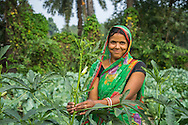 Vegetable farmer Sawan Kumari, a member of a Farmer's Producer Group, tends to her okra (lady's finger) plants in her farm in Machahi village, Muzaffarpur, Bihar, India on October 26th, 2016. Non-profit organisation Technoserve works with women vegetable farmers in Muzaffarpur, providing technical support in forward linkage, streamlining their business models and linking them directly to an international market through Electronic Trading Platforms. Photograph by Suzanne Lee for Technoserve