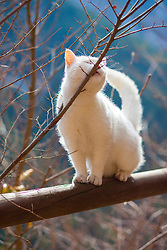 White Cat Nuzzling against Tree Branch