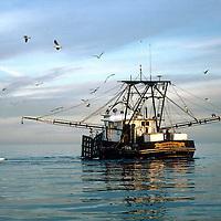 Fishing & Seafood