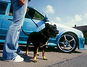 A girl with a Pitbull terrier, stood next to her customised Ford Escort car, UK, 2000's.