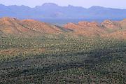The desert floor at sunrise, Organ Pipe Cactus National Monument, Arizona