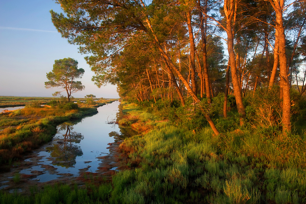 Morning light in the delta pine forrest. The Karavasta Lagoons National Park, Albania June 2009