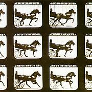 Trotting Horse de MUYBRIDGE (1881) <br /> <br /> C&rsquo;est ainsi qu&rsquo;on a pu d&eacute;couvrir et comprendre la fa&ccedil;on dont les chevaux pla&ccedil;aient leur pattes pendant le trot et la galop. Cela, l&rsquo;&oelig;il nu ne pouvait le distinguer. <br /> La photographie intervient aussi dans les enjeux scientifiques. C&rsquo;est une v&eacute;ritable encyclop&eacute;die du mouvement &agrave; la fois de l&rsquo;art et de la science.<br /> <br /> (in Histoire de voir,  vol. 2, p 10 .)