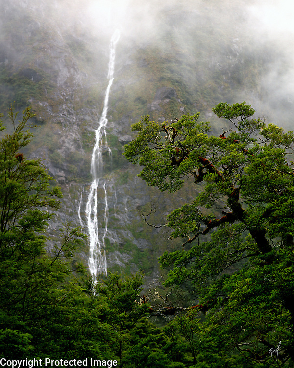 Waterfalls on the road to Milford Sound on the South Island of New Zealand, contrasted against a magnificent tree.