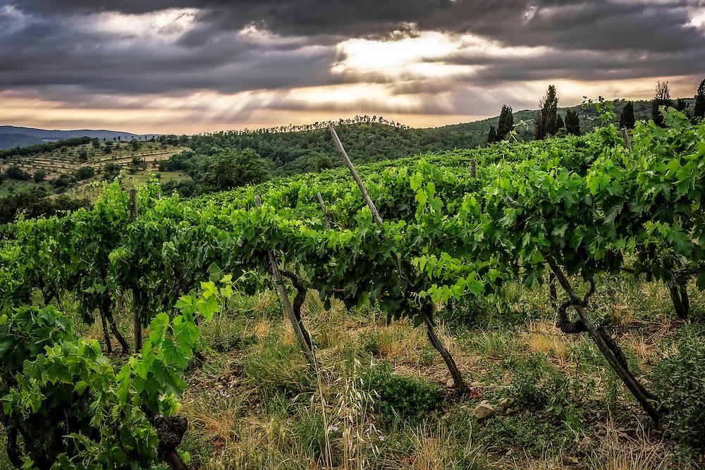 Tuscan vineyard under a dark sky with sunbeams