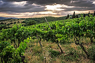 Tuscan vineyard under a dark sky with sunbeams