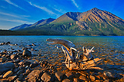 Driftwood on shore of Kathleen Lake with St. Elias Mountains in the background.<br />