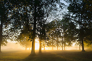 Sun beaming through the morning fog at Krodell Park in Point Pleasant, West Virginia.