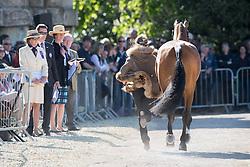 Bullimore Sarah, (GBR), Valentino V<br /> CCI4* - Mitsubishi Motors Badminton Horse Trials 2016<br /> © Hippo Foto - Jon Stroud<br /> 06/05/16
