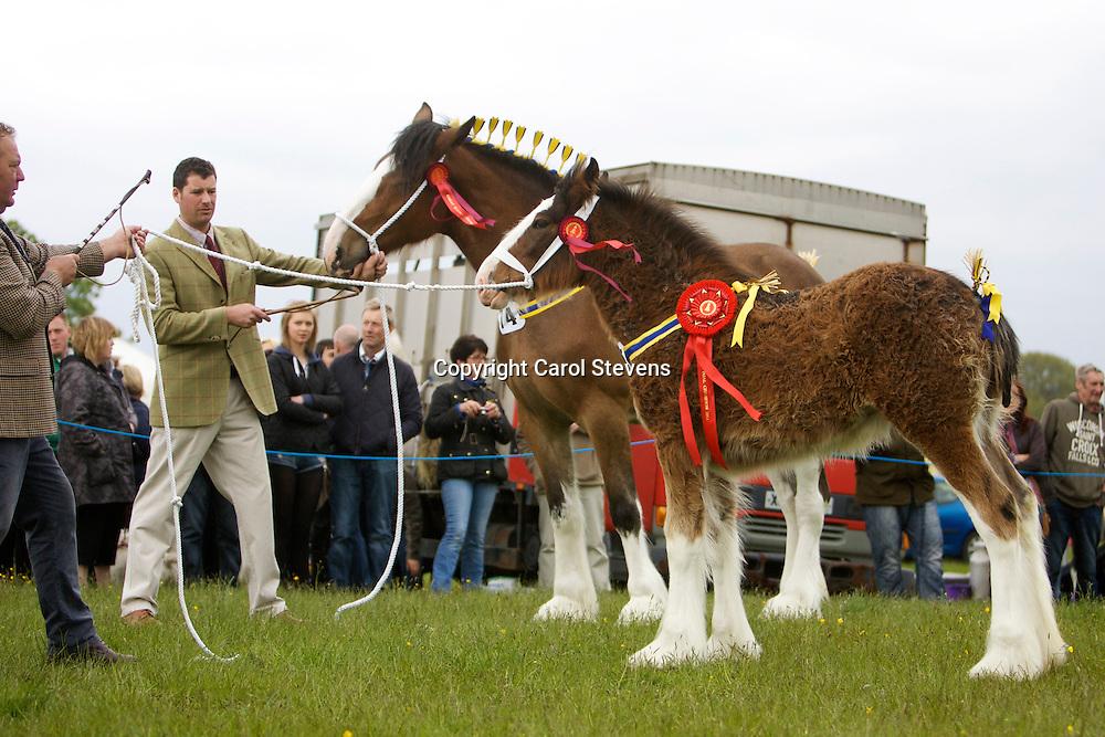 Mr P Woof's Marieth Maizie (Sire - Marieth Major), Supreme Champion and her foal, Marieth Michaela (Sire - Red Brae Mascot), Champion Foal