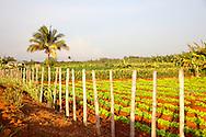 Farm near Belic, Granma, Cuba.