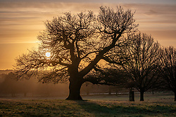 © Licensed to London News Pictures. 11/12/2019. London, UK. Walkers and wildlife photographers were greeted with an orange sunrise over Richmond Park this morning as  weather experts predict more wind, rain and showers for voters in tomorrow's General Election on Thursday 12th December 2019. Photo credit: Alex Lentati/LNP