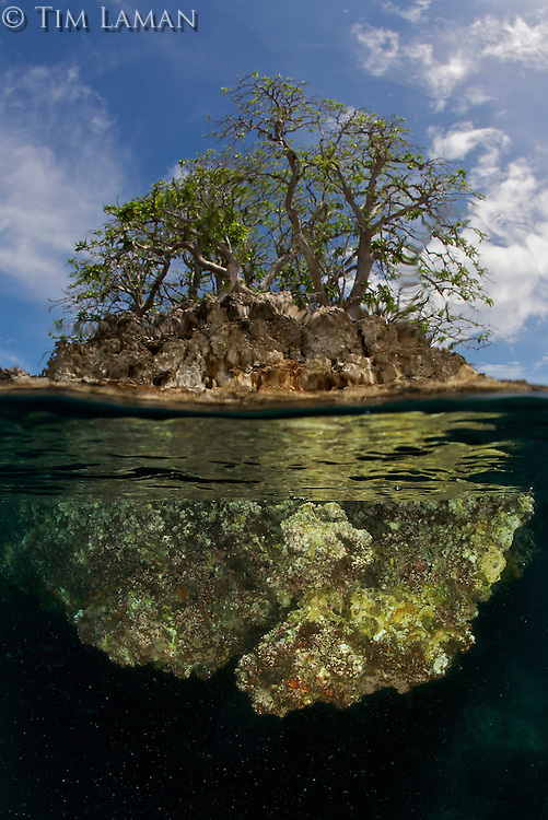 A limestone outcrop island sticks above the surface in this above and below view showing part of the underwater wall of the island.  Raja Ampat Islands, Indonesia.