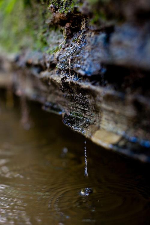 Januaria_MG, Brasil...A fazenda Agroecologica Soma, se intitula uma fazenda produtora de agua. Localiza no municipio de Januaria, a 250 km de Montes Claros, usa a tecnica de Barraginhas ou Bacias de Captacao de Agua de Chuva para recuperar os lencois freaticos e consequentemente os rios da regiao. Em 2005, foram construidas mais de 300 barraginhas na regiao, e acredita-se que o volume de agua dos lencois freaticos cresceu, inclusive com a recuperacao de um rio que corta a propriedade...Na foto, detalhe de uma surgencia natural de agua no Rio Tamboril, vinda de um lencol freatico da bacia. A surgencia e um sinal do aumento do volume de agua na regiao...The Soma Agroecology farm, is called a farm producing water. Located in the city of Januaria, 250 km from Montes Claros, uses the technique  rainwater catchment to recover the ground water and consequently the rivers of the region. On 2005, they built 300 dam or rainwater catchment in the region, and it is believed that the volume of water of groundwater has grown, including the recovery of a river in the property...In this photo, detail of the water in the river, from a groundwater basin, a sign of the increased volume of water in the region...Foto: BRUNO MAGALHAES / NITRO