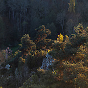 Forest in autumn colors, Gorges de la Moune, France, Auvergne