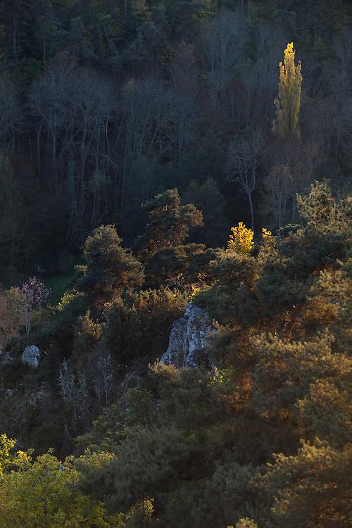 Forest in autumn colors, Gorges de la Moune, France, Auvergne