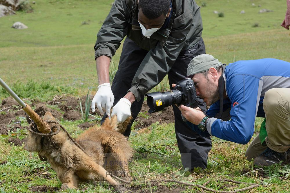 Lorenz Andreas Fischer bei der Arbeit mit einemTollwut-Impfteam des EWCPs bei der Arbeit in einem Dorf nahe von Dinsho am Rand des Bale Mountains Nationalparks