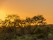 Trees are silhouetted against an orange sky as the sun begins to set over the African bush.