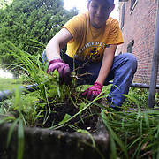 BRONX, NY - 8/18/2018 - Chief Select Hospital Corpsman Winter Landmann-Herd pulls weeds from the front steps of Samuel H. Young American Legion Post 620 on Saturday as part of CPO365 Phase II. <br /> Landmann-Herd and her class of U.S. Navy Chief Selects from Navy Operational Support Center New York volunteered at the American legion in advance of the Legion hall's 100th Anniversary this fall. (U.S. Navy Photo by Chief  Mass Communication Specialist Roger S. Duncan / RELEASED )