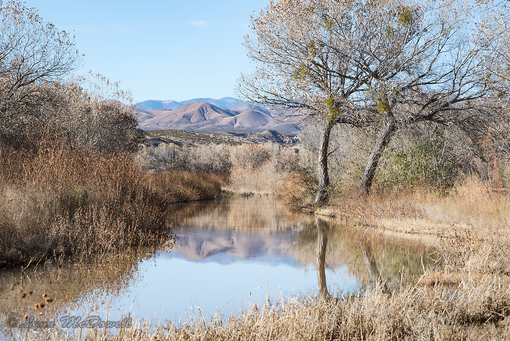 Beautiful light and reflection at Bosque del Apache NWR